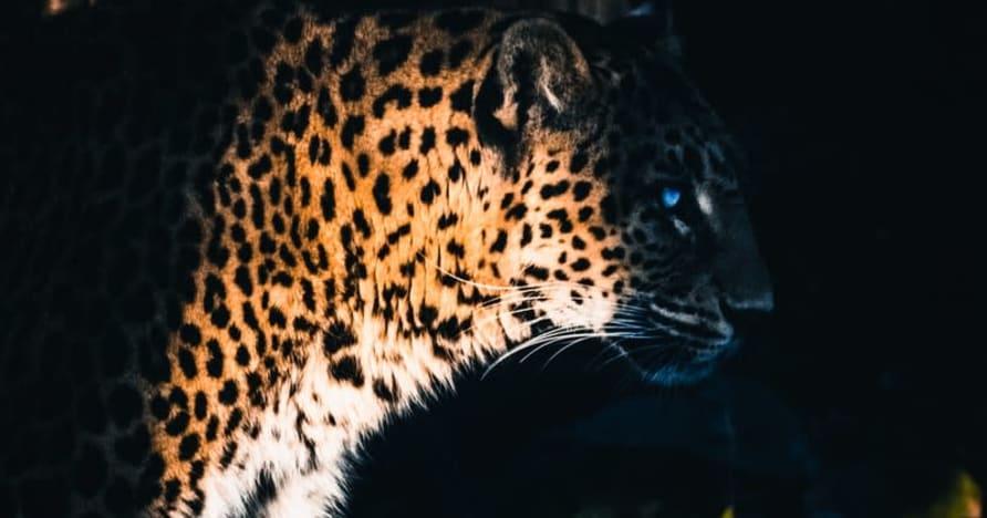 Yggdrasil Bermitra ReelPlay untuk Merilis Jaguar SuperWays dari Bad Dingo